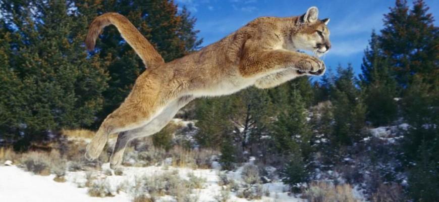 Puma Termaria